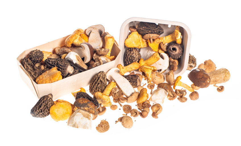 Mushroom City - Exotic mushrooms, forest mushrooms, truffles, olive oil, Stoffels tomatoes, delicacies